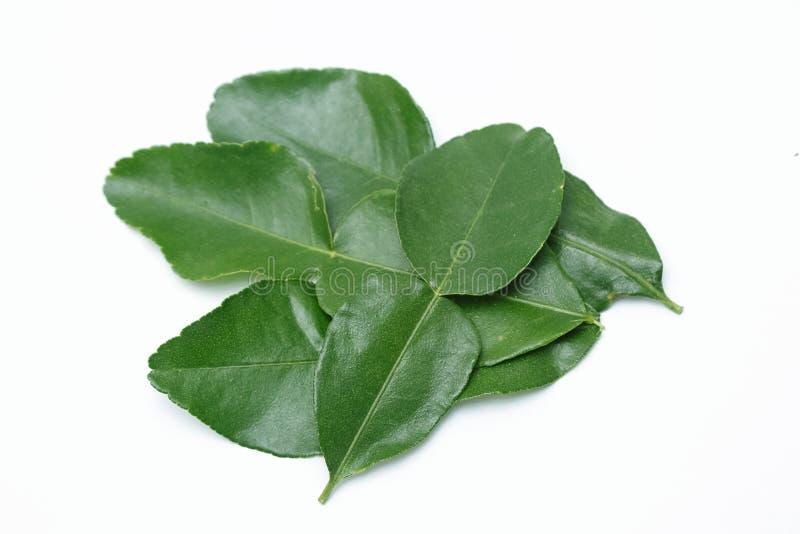 Leaf of bergamot (kaffir lime) isolated stock photo
