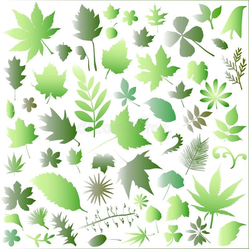 leaf big set