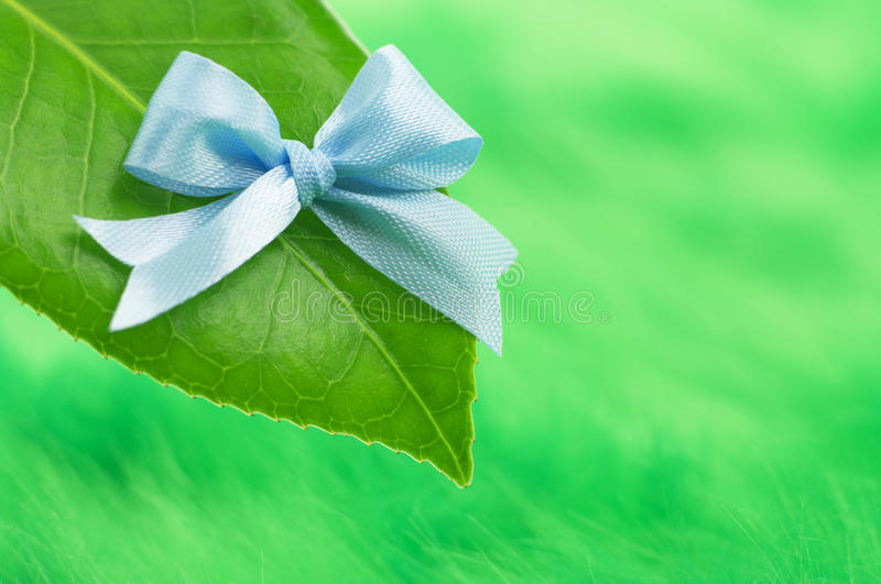 Download Leaf with blue ribon stock photo. Image of tranquil, scene - 22514468