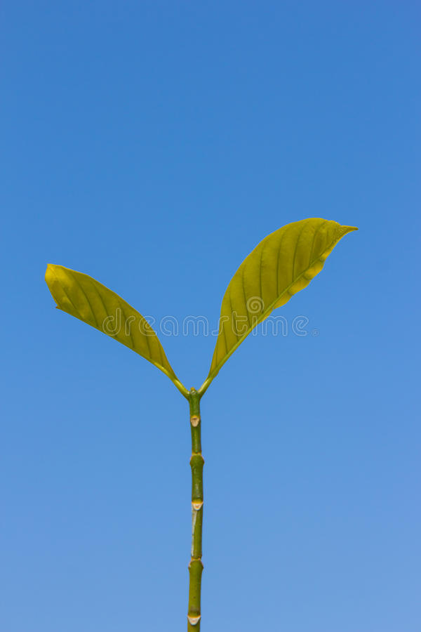 Download The Leaf On A Blue Sky Background Royalty Free Stock Photo - Image: 36709095