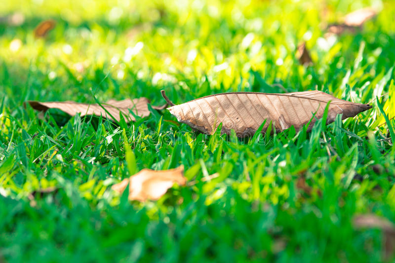Leaf blur background in park of Thailand stock photo
