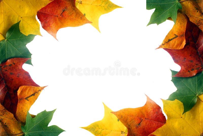 Download Leaf border stock image. Image of orange, abstract, green - 11340515