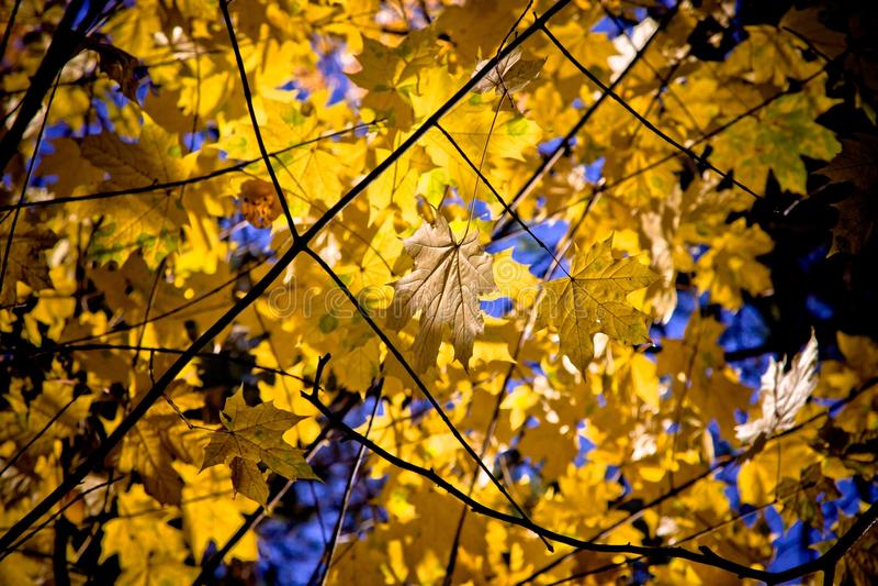 Leaf, Branch, Nature, Yellow Free Public Domain Cc0 Image