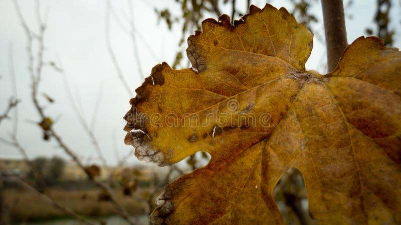 Leaf on the branch stock photography