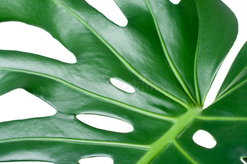 Download Leaf close-up stock photo. Image of leaf, nature, background - 13010688
