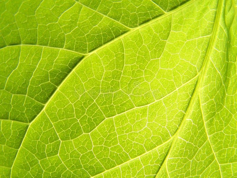 Leaf: Close up. A Close up of leaf taken under bright sun stock image