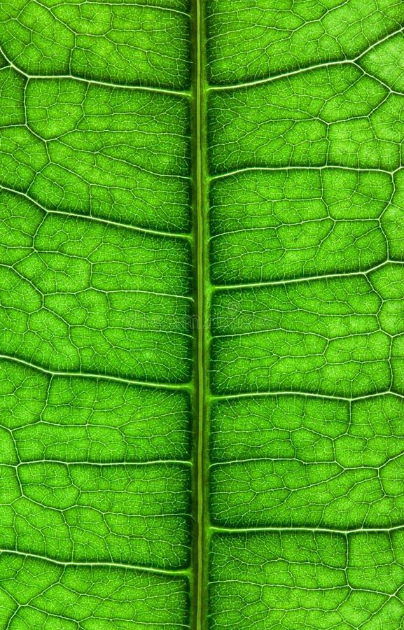 Download Leaf close up stock photo. Image of life, leaves, botany - 19861118