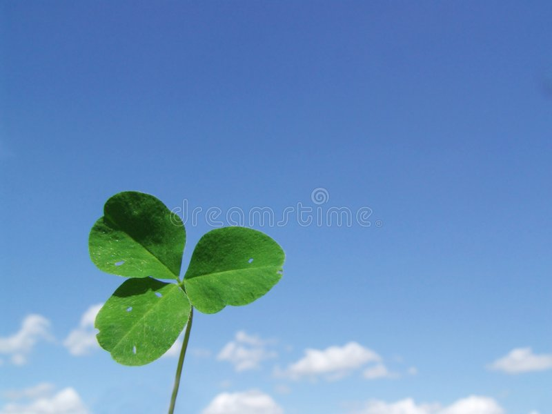 Leaf clover on a background blue sky royalty free stock image