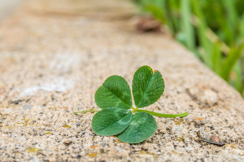 4-leaf clover on the curb stock photos