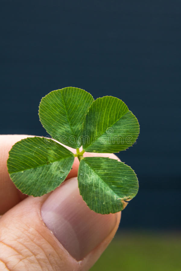 4-leaf clover in fingers with blue and green background stock images