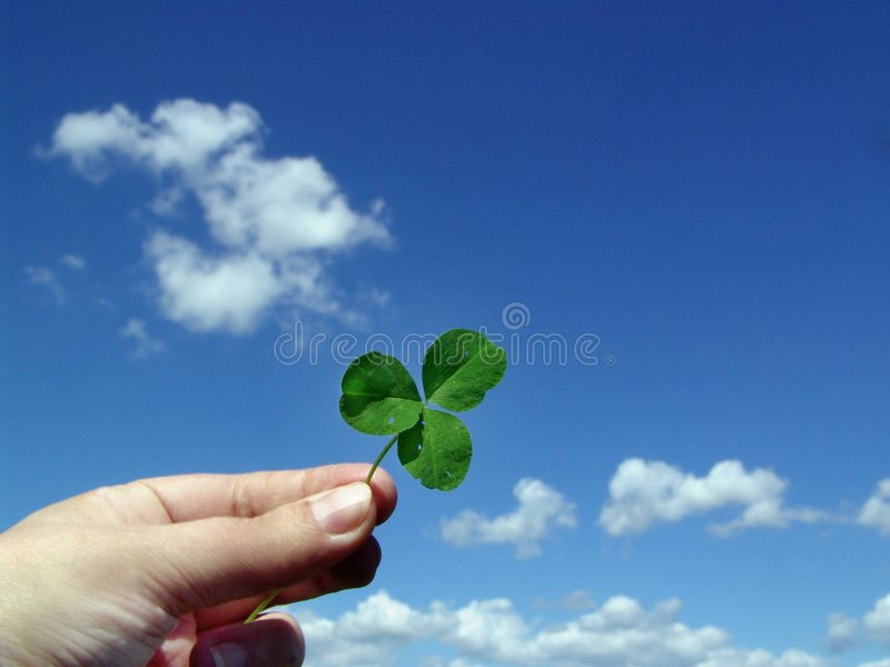 Leaf of clover in hand stock photos