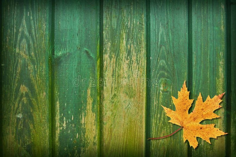 Leaf Collage. Variations on a leaf collage with a grunge wood texture royalty free stock image
