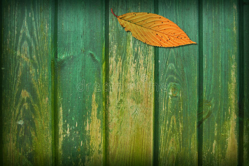 Download Leaf Collage stock photo. Image of aged, collage, variation - 11853742
