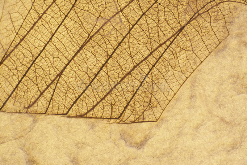 Leaf Collage royalty free stock photography