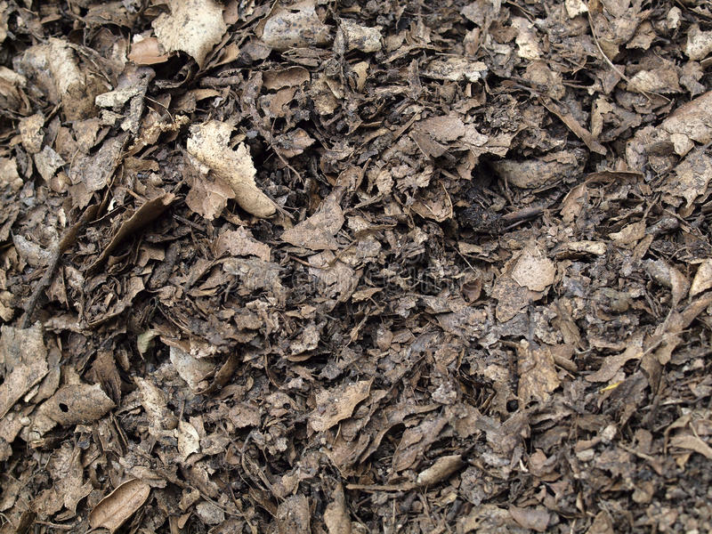 Leaf compost mulch for background. Dried out in the sun Leaf compost mulch pattern for background royalty free stock photography
