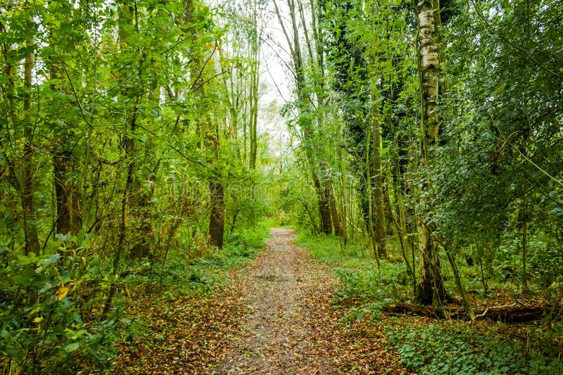 Forest path in beusebos the netherlands. A leaf covered path in the beusebos forest next to purmerend, The Netherlands royalty free stock image