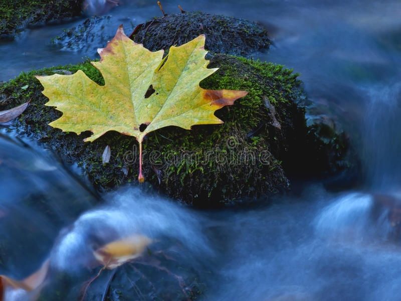 Leaf at the creek royalty free stock photo
