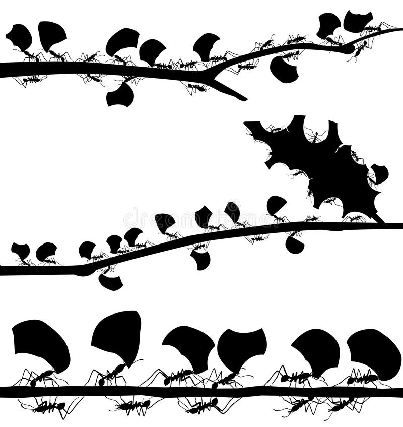Leaf cutter ant foregrounds stock illustration