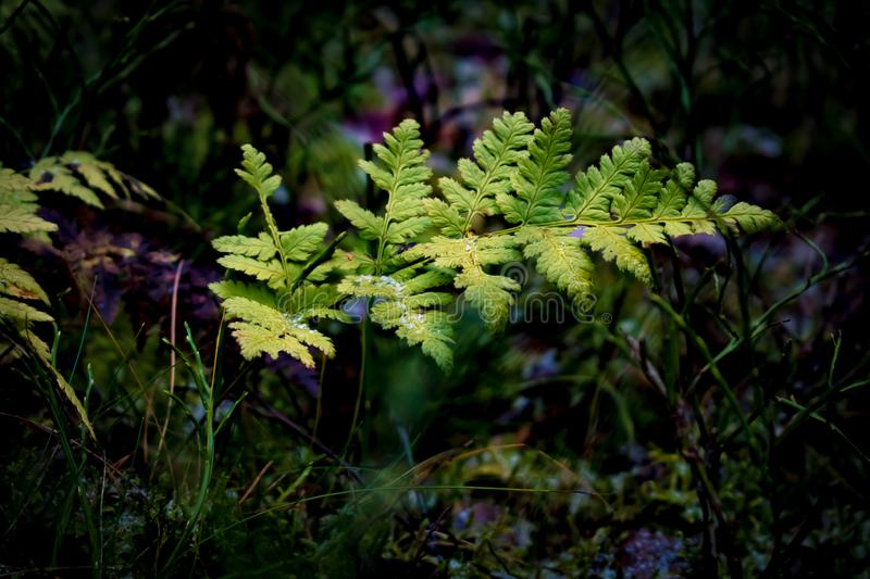 Leaf in a dark forest. stock photography