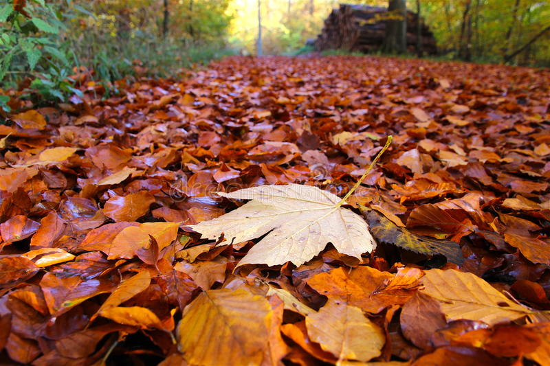 The leaf is decreased. In November stock photo