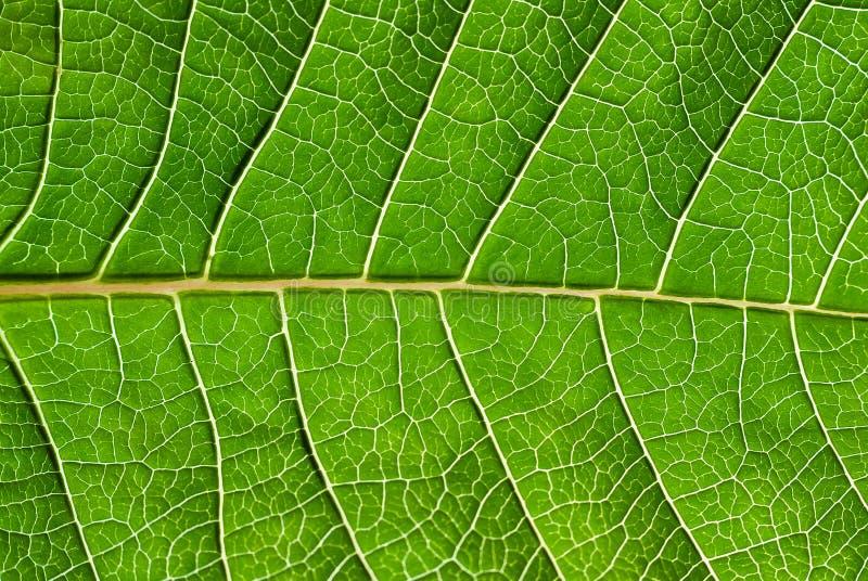 Leaf detail. stock photo