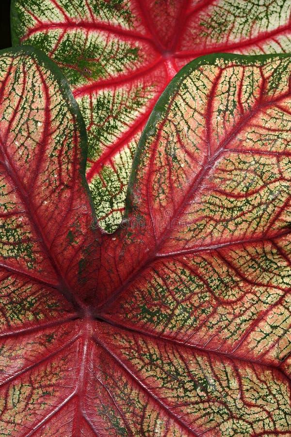 Leaf detail stock image