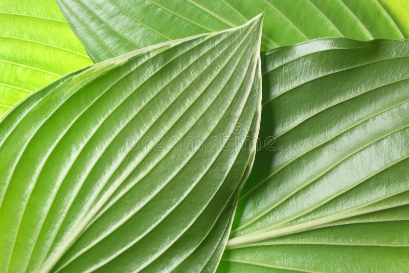 Leaf detail background stock images