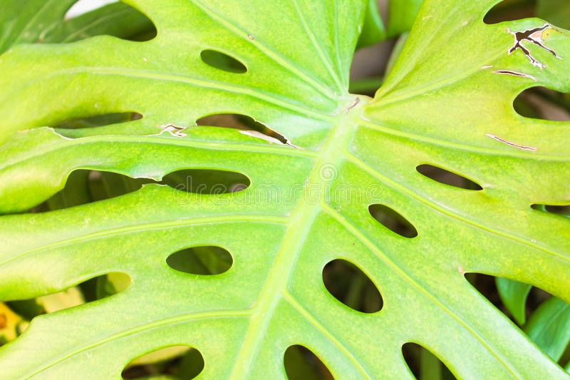 Leaf Detail Beauty Garden Plant Colourful royalty free stock photo