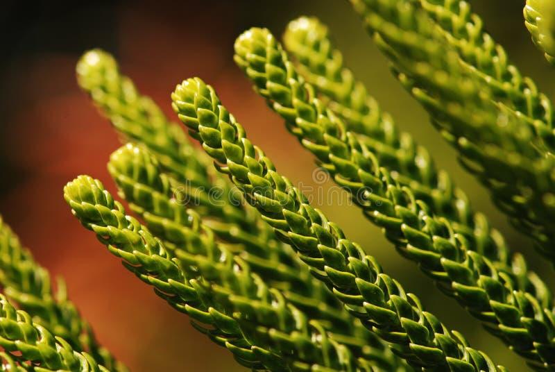 Leaf details stock photos