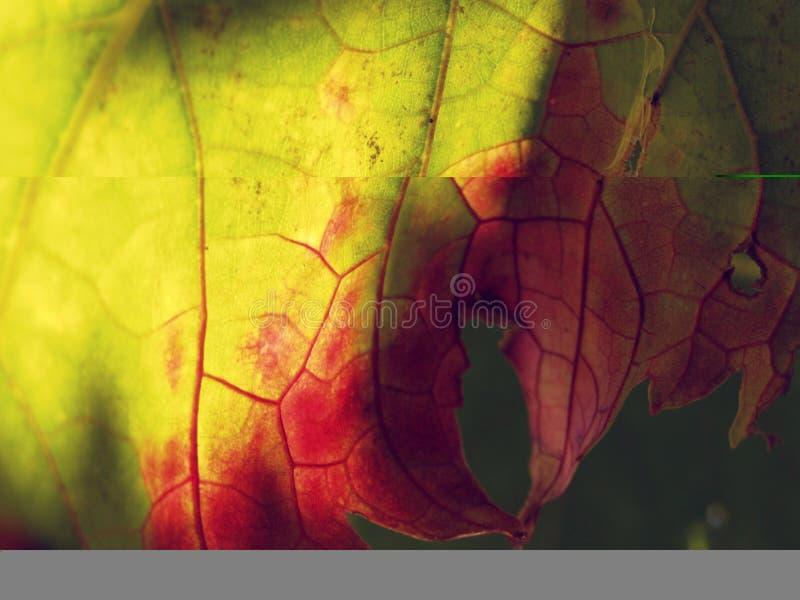 Download Leaf details stock image. Image of macro, stripes, autumn - 3862029