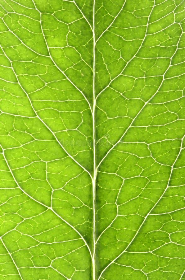 Free Leaf Details Royalty Free Stock Image - 5544726