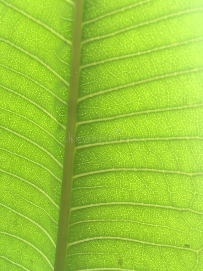 Leaf details stock photo
