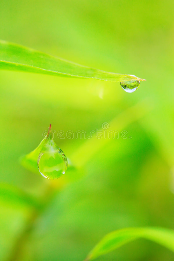 The Leaf With Dew Stock Photography