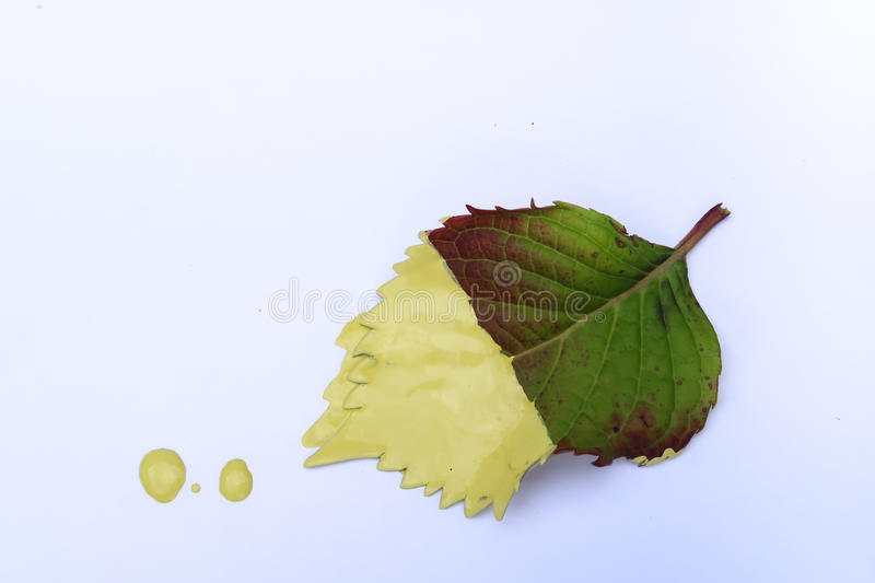 Leaf Dipped into Yellow Paint stock photo