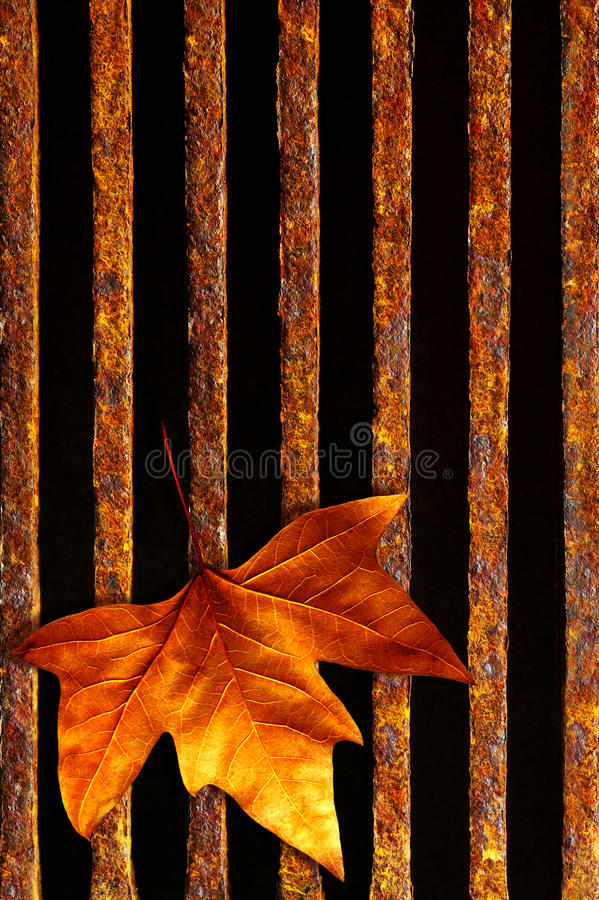 Leaf in drain stock photos