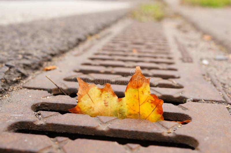 Leaf in drain stock image