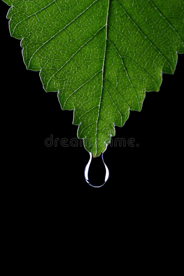 Leaf with droplet royalty free stock image
