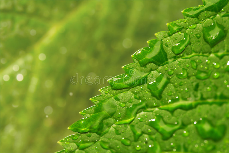 Download Leaf with drops stock image. Image of focus, waterdrops - 6083623