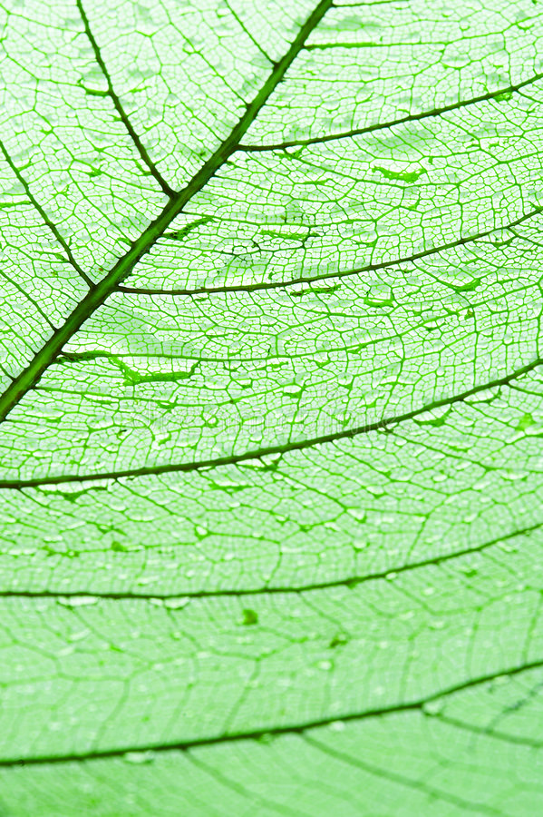 Download Leaf With Drops Of Water Stock Photos - Image: 2317393