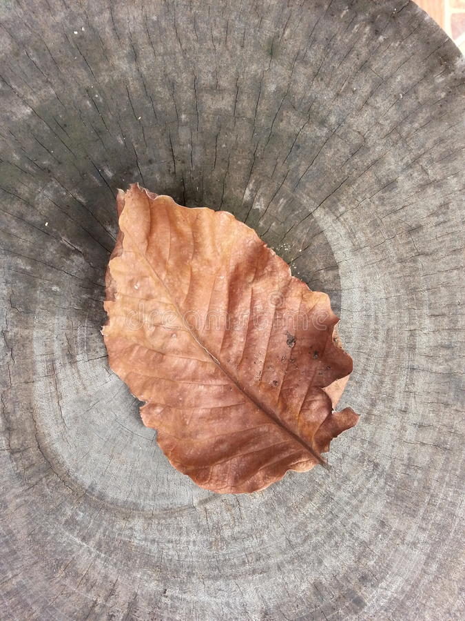 leaf dry stock photography