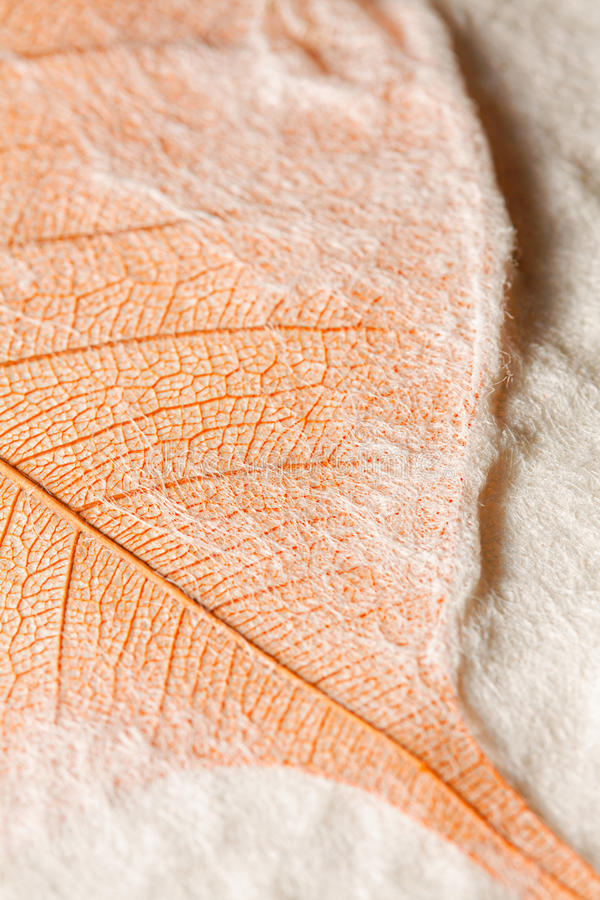 Download Leaf Embedded In Handmade Paper Stock Photo - Image: 21941696