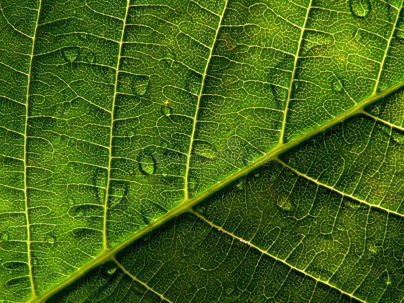 Download Leaf för 2 droppe fotografering för bildbyråer. Bild av trevligt - 994235
