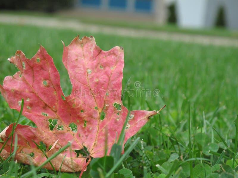 leaf för höstgräslawn royaltyfri bild
