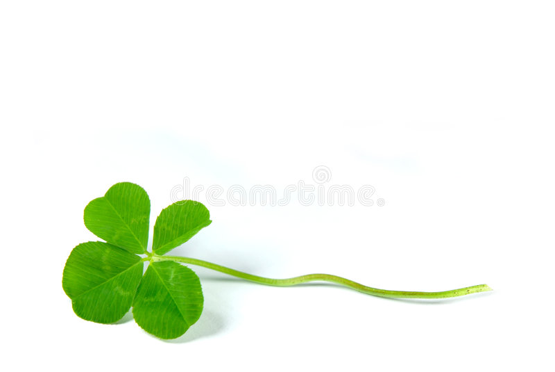 leaf för växt av släkten Trifolium fyra arkivfoto