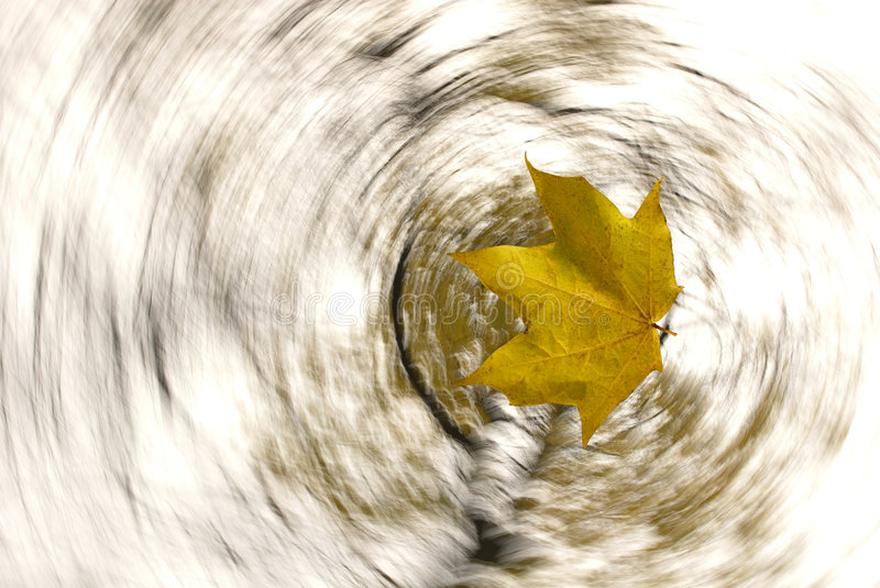 Leaf fall royalty free stock images