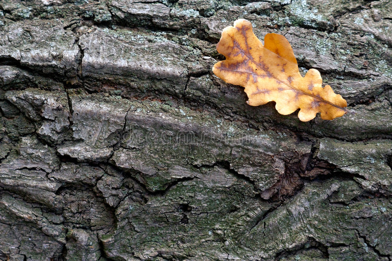 Download Leaf Fall Stock Photo - Image: 487180