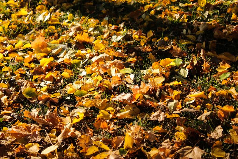 Leaf fall at the height of autumn stock photography