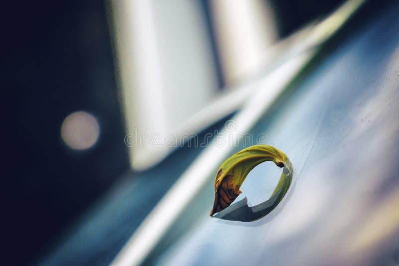 Leaf fallen on windshield wiper of a car. stock photo