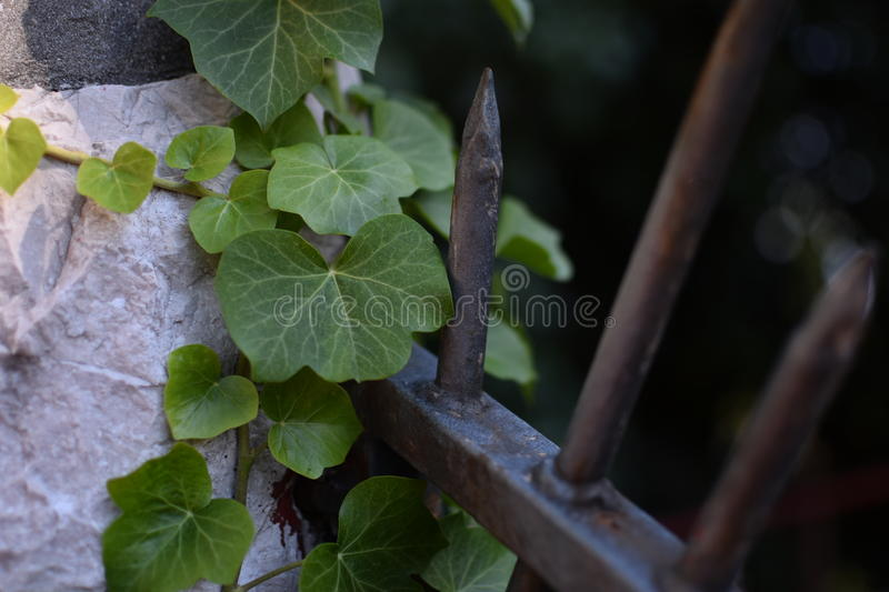 Leaf Fence royalty free stock image