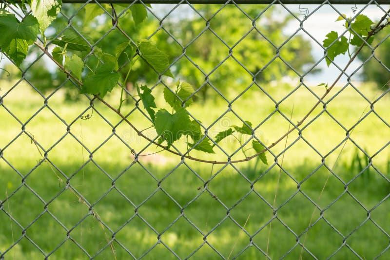 Leaf on Fence stock images
